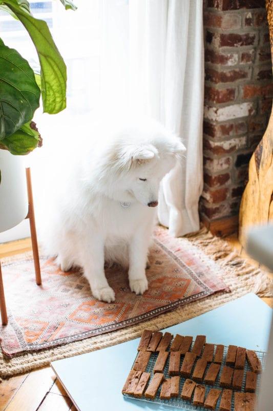 Healthy Homemade Dog Treats | Nutrition Stripped