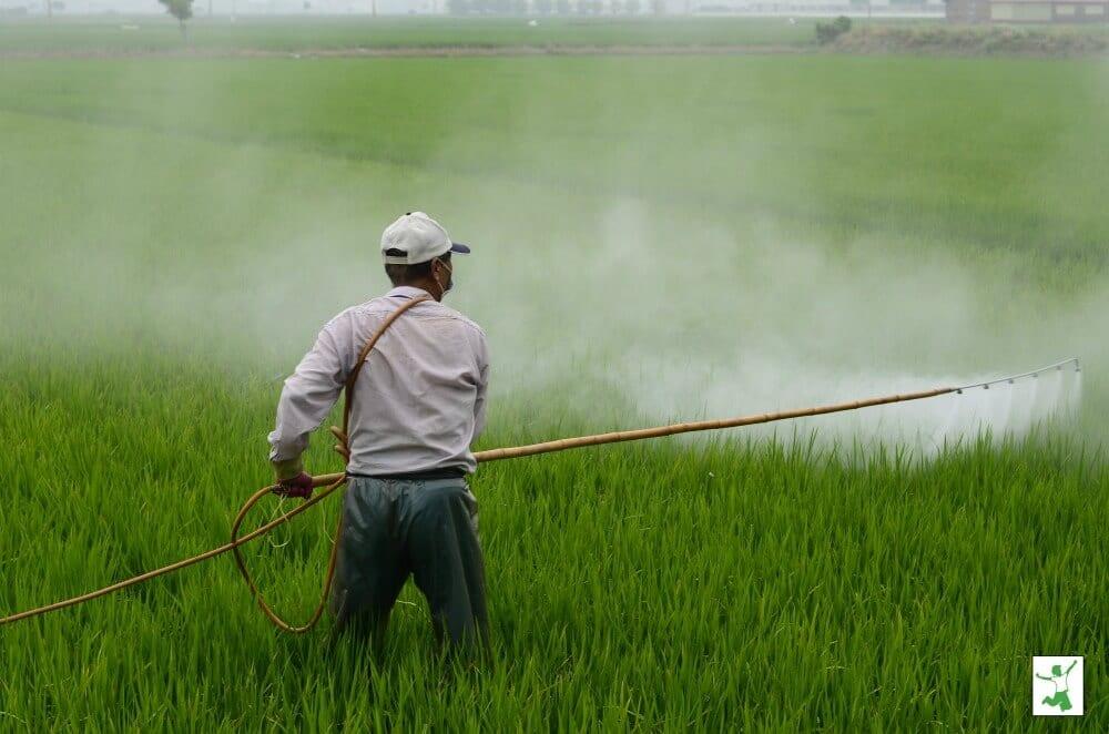 man spraying roundup on grass