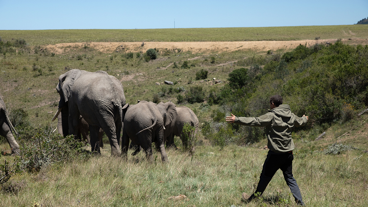 A still from Animals on the Loose: A You vs. Wild Movie showing a man walking behind a group of elephants who are running away